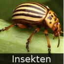 DE-Tiere-insects.jpg