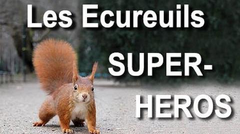 LES ÉCUREUILS SUPER-HÉROS - PAROLE D'ÉCUREUIL