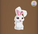 Albino Bunny