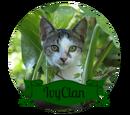 Foxfaith/IvyClan Template