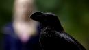 105~Caroline-Crow.png