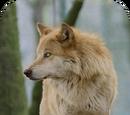 Aria (Budgielover19)