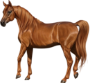 Arabian Mare Chestnut.png