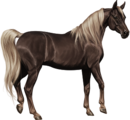 Arabian Mare Chestnut Flaxen Sooty.png