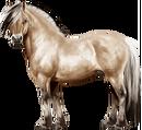 Fjord Stallion Dun Bay.png