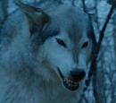 Nymeria (loup-garou)