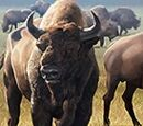 Enlarged Aurochs Herd