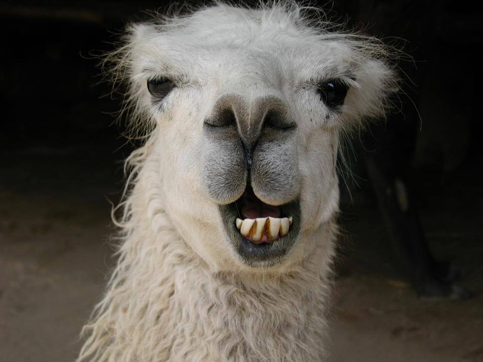 Smiling-llama-header.jpg