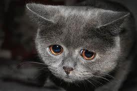 Catface.jpg